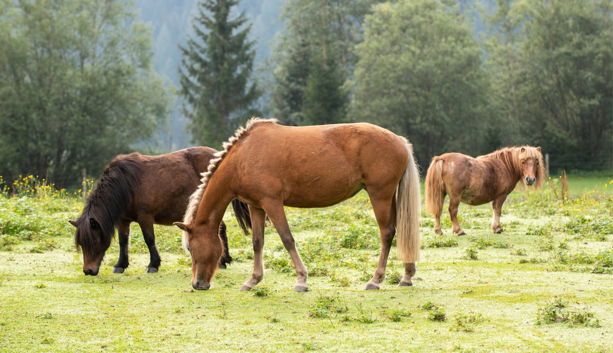 Ponyranch