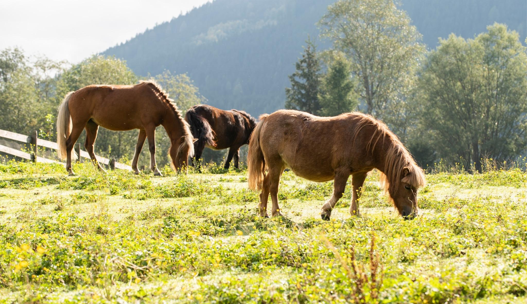 Pony Ranch