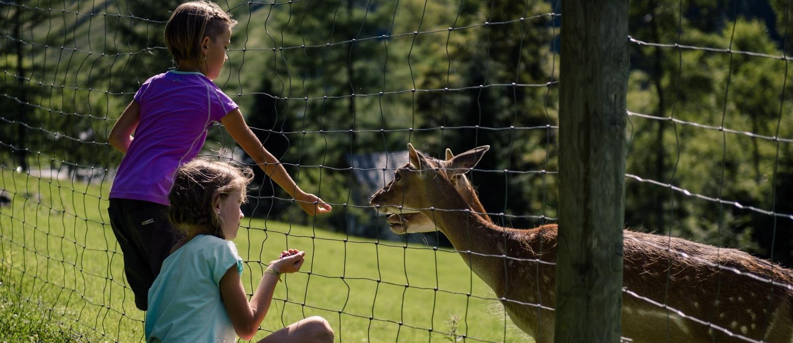 Freizeit und Wildpark Ferleiten